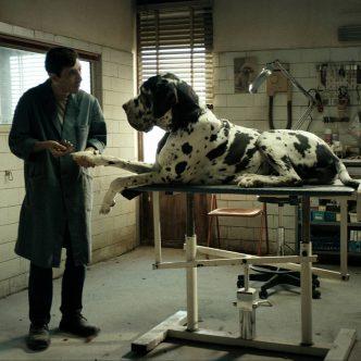 Pes na stole veterináře